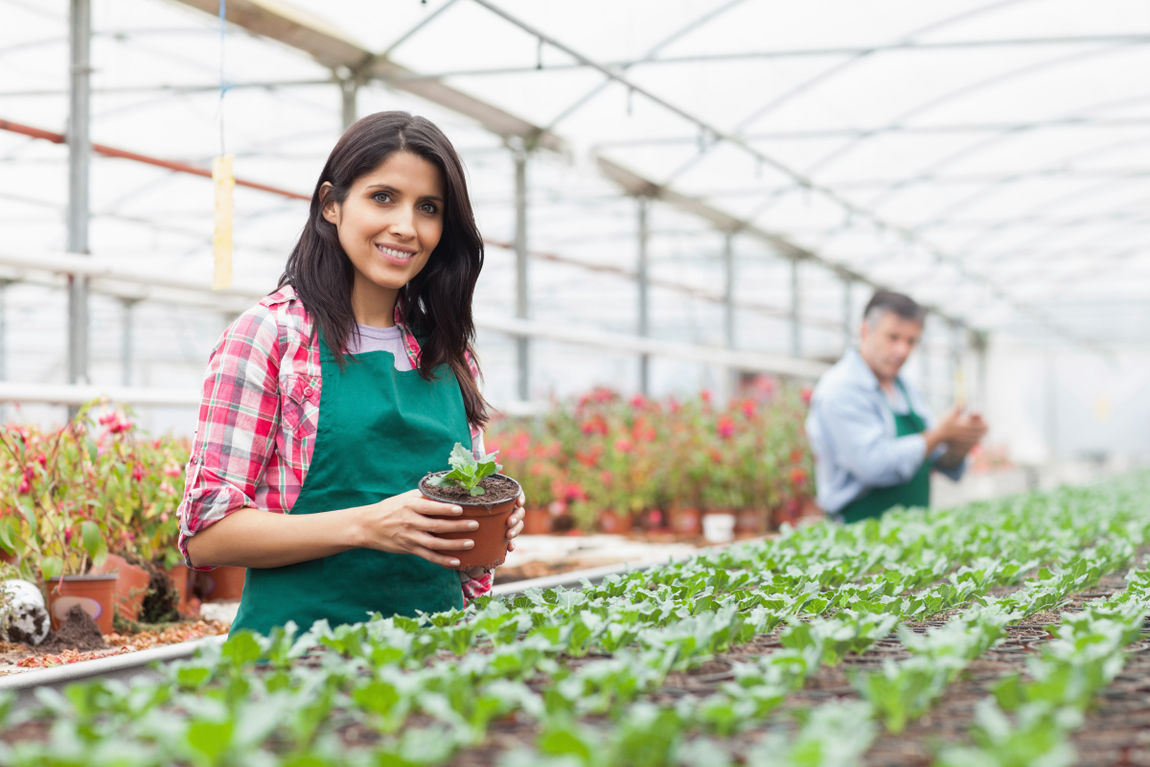 Woman working in the greenhouse holding plant